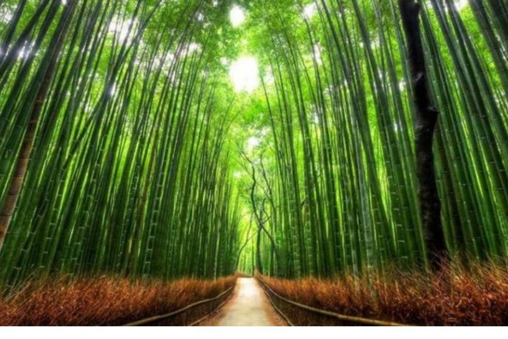 A vida e o bambu